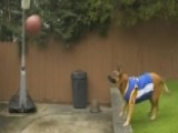Rescue Dog Throws Perfect 'alley-oop' In Viral Video