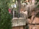 Scare At The Zoo: Toddler Falls Into Jaguar Exhibit