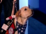 Service Dogs Helping Soldiers Deal With PTSD