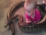 Snake Dad Gets Slammed