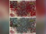 Satellite Images Show Growing Danger Of Boko Haram
