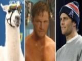 Super Bowl 2015: Llamas, Marvel Heroes And Deflate-gate