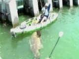 Screaming Kayaker Reels In Goliath Grouper