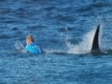 Surfer Makes Harrowing Escape From Shark On Live TV