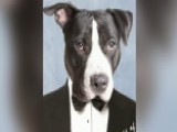 Shelter Pets Pose For Retro Yearbook Photos