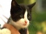 Stowaway Kitten Found Near Car Engine After 200-mile Trip