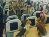 Saudi Prince Buys 80 Airline Seats For His Falcons