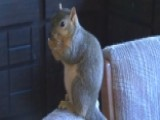 Squirrel Takes Bite Out Of Crime, Stops Burglar