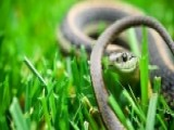 SD Man Fined For Not Having Pet Snake On A Leash In Public