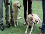 Service Dogs Giving Independence Back To Disabled Americans