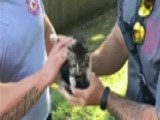 Stuck Kitten Rescued By Louisiana Firefighters