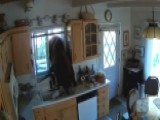 Surveillance Video Captures Bear Breaking Into Calif. Home