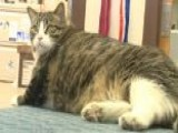 Tubby Tabby Finds New Home