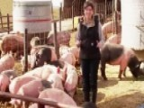 The Hogs Are Back In New Joni Ernst TV Spot