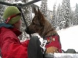 Training Never Ends For Search And Rescue Canines