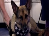 The Importance Of Service Dogs For Veterans