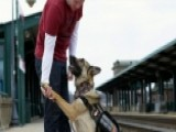 The Importance Of Service Dogs To Our Veterans