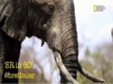 Tracking Illegal Slaughter Of African Elephants