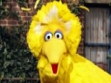 Tucker Debate: Should The Government Cut Off Big Bird?