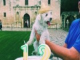 Traveling Pup Goes Viral