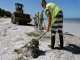 Toxic Algae Bloom Decimates Florida Sea Life