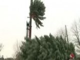 Top Of Ohio Christmas Tree Snaps Off