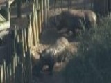 Toddler Hurt After Falling Into Rhino Pit At Florida Zoo