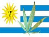 Uruguay Mulls Government Marijuana Sales