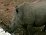 US Military Forces Fight Animal Poachers