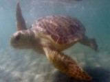US Coast Guard Rescues Two Trapped Sea Turtles