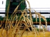 US Farmers Worry Trump Tariffs Could Hurt Business