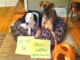 Vets: 'dog-shaming' Craze Undermines Pets' Dignity