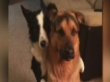 Video Of Dog Hugging His 'best Friend' Goes Viral