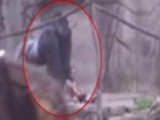 Video Shows Gorilla Dragging Child In Cincinnati Zoo