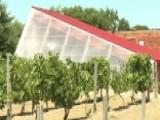Vineyard Revitalizing Cleveland Neighborhood