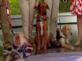 Veterans Get New Leash On Life With K9s For Warriors