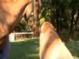 Viral Video: Dog Nurses Horse Back To Health