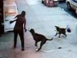 Warning, Graphic Video: Pit Bulls Maul Woman