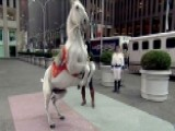 World-renowned Equestrian Tour Comes To New York City