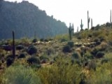 Western Saloon Hidden In Arizona Hills