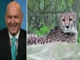 What Led To Mother Dangling Child Over Cheetah Pit At Zoo?