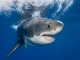 Why The Spike In Shark Attacks And What Do We Do?