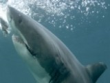 What Can Be Done To Slow Down The Shark Attack Surge?