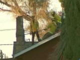 Would-be Burglar Gets Stuck In Chimney, Dies