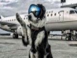 Wildlife Control Dog Keeps Planes Safe On Takeoffs, Landings