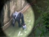 Why Didn't The Cincinnati Zoo Tranquilize The Gorilla?