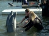 Wounded Warriors Swim With Dolphins