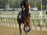 What To Know About Racing Horse Justify