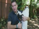 Why Glenn Greenwald Is A Dog's Best Friend
