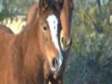 Wild Horses Getting Help In Severe Drought